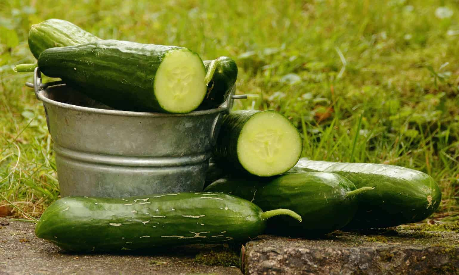 Cucumbers Are The Perfect Low Carb Keto Snack